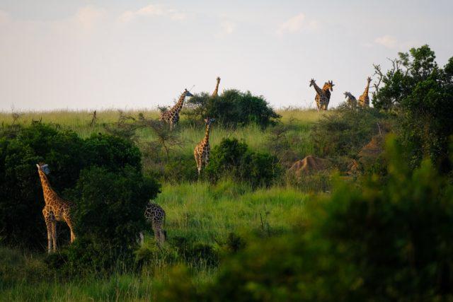 https://www.empressworldwide.in/wp-content/uploads/2019/08/africa-animal-photography-animals-1233286-640x427.jpg